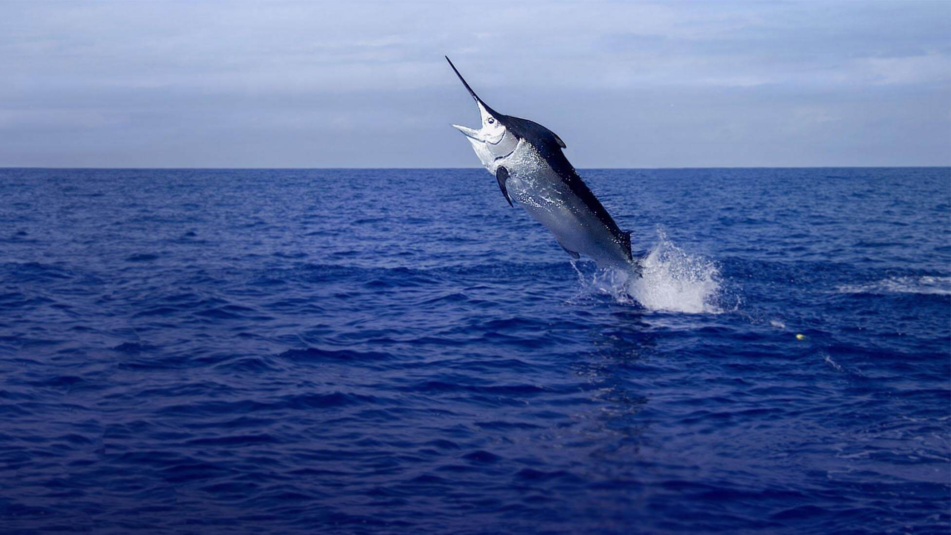 Best Fishing Charter Aruba